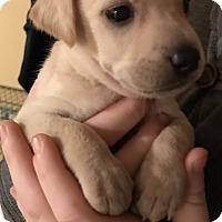 Adopt A Pet :: Peter - Palm Harbor, FL