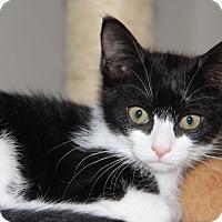Adopt A Pet :: Jackie KITTEN - tampa, FL