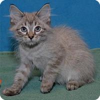 Adopt A Pet :: Poof - Lenexa, KS