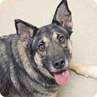 Adopt A Pet :: BALIEY - Decatur, IL