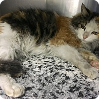 Adopt A Pet :: Leilani - Oakdale, CA