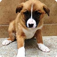 Adopt A Pet :: Wyatt & Willow