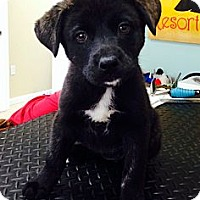 Adopt A Pet :: Cici - Miami, FL