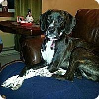 Adopt A Pet :: Rosie - Morgantown, WV