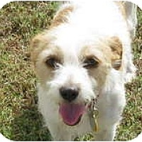 Adopt A Pet :: MISSY II - Scottsdale, AZ