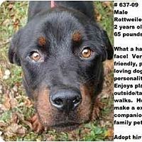 Adopt A Pet :: # 637-09 @ Animal Shelter - Zanesville, OH