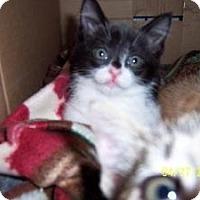 Adopt A Pet :: Maxine - Island Park, NY