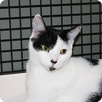 Adopt A Pet :: Mercy (LE) - Little Falls, NJ