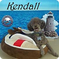 Adopt A Pet :: Kendall - Arcadia, FL