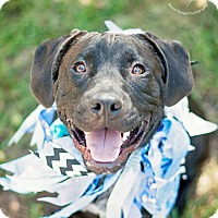 Adopt A Pet :: Gotham - Kingwood, TX