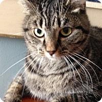 Adopt A Pet :: Luna - Covington, KY