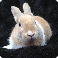 Adopt A Pet :: Murphy - Watauga, TX
