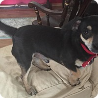 Adopt A Pet :: Flash - Livermore, CA