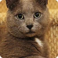 Adopt A Pet :: Bruno Mars - Herndon, VA