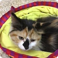 Adopt A Pet :: Michaela - Medina, OH