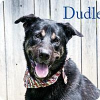 Adopt A Pet :: Dudley - Hamilton, MT