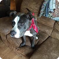 Adopt A Pet :: Tyson - Carey, OH