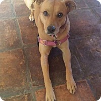 Adopt A Pet :: Yoshi - Las Vegas, NV