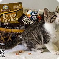 Adopt A Pet :: GRAHAM - Sandusky, OH