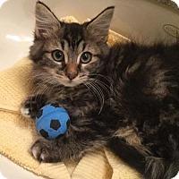 Adopt A Pet :: Queenie - Santa Clarita, CA