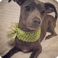 Adopt A Pet :: Winny - Kenner, LA