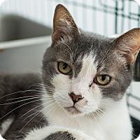 Adopt A Pet :: Richard the Lionheart - Los Angeles, CA