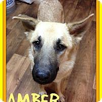 Adopt A Pet :: AMBER - Sebec, ME