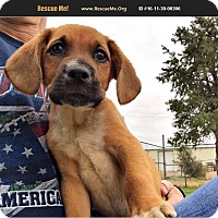 Adopt A Pet :: Woody - Denver, CO