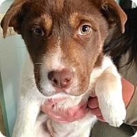 Adopt A Pet :: Motchi - South San Francisco, CA
