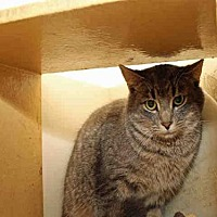 Adopt A Pet :: MARBLE - Pittsburgh, PA