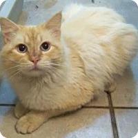 Adopt A Pet :: Rori - Ennis, TX