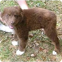 Adopt A Pet :: Boswell - Orlando, FL