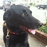Adopt A Pet :: Geneva - Brooklyn, NY