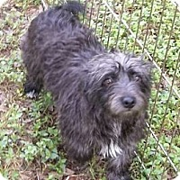 Adopt A Pet :: Sophie - Lockhart, TX
