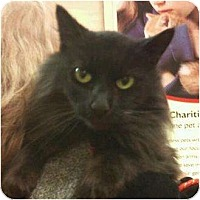 Adopt A Pet :: Ruthie - Modesto, CA