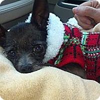 Adopt A Pet :: Holly Belle - Hazard, KY