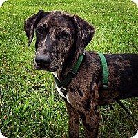 Adopt A Pet :: Gus - Richmond, VA