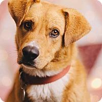 Adopt A Pet :: Jethro - Portland, OR