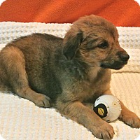 Adopt A Pet :: Ringo - East Sparta, OH