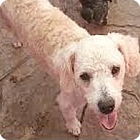 Adopt A Pet :: Guthrie-Adoption Pending - Boulder, CO
