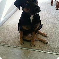 Adopt A Pet :: Dakota - Manhasset, NY