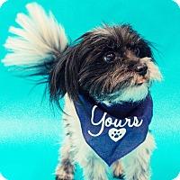 Adopt A Pet :: Dallas - Bedford, TX