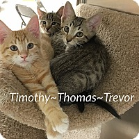 Adopt A Pet :: Timothy~Thomas~Trevor - Foothill Ranch, CA