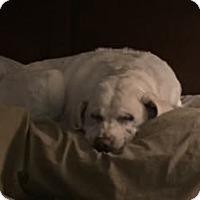 Adopt A Pet :: Riley - San Francisco, CA