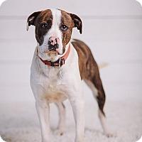 Adopt A Pet :: Dawson - Portland, OR