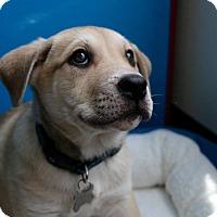 Adopt A Pet :: Reuben-Adopted! - Detroit, MI
