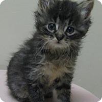 Adopt A Pet :: Steven - Gary, IN