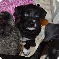 Adopt A Pet :: Chance - Memphis, TN