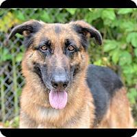 Adopt A Pet :: Laurence - Waco, TX