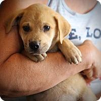 Adopt A Pet :: Boz - Glastonbury, CT